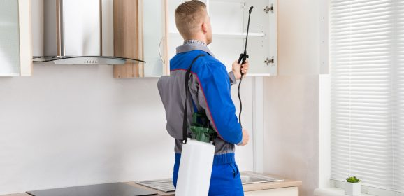 Eco-Friendly Methods Suggested by Your Pest Control Middletown NJ Professionals