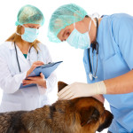 Finding The Right Animal Clinic in Honolulu For Your Best Friend