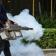 How to find the best pest control services Maui has