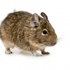 Mice Plymouth MA: Reasons Why You Need to Consider Pest Control Services