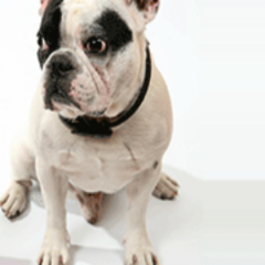 Caring for Whatever Your Pets May Need with Veterinary Services in Richmond