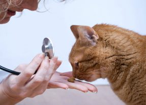 How Can a Veterinary Service in Bel Air, MD Help Your Pet?