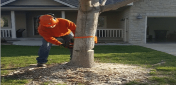 Stump Grinding in Wamego, KS Reduces Liability