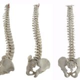 Get Well by Visiting a Chiropractor in Florissant MO