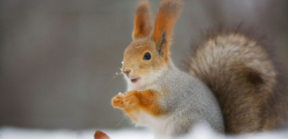 When to Seek Out Squirrel Removal Services in Reynoldsburg