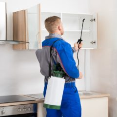 Protect Your Home From Pest Infestation