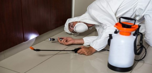 Pest Exterminator in Federal Way WA, is The Most Effective Option