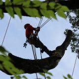 Reasons To Obtain Emergency Tree Services In Marietta GA