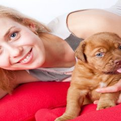 Animal Health Certificates: What Are They and When Do You Need Them?